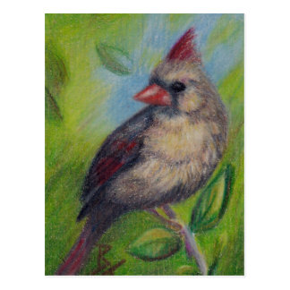 Little Miss Cardinal aceo Postcard