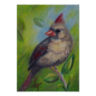 Little Miss Cardinal aceo Poster Print