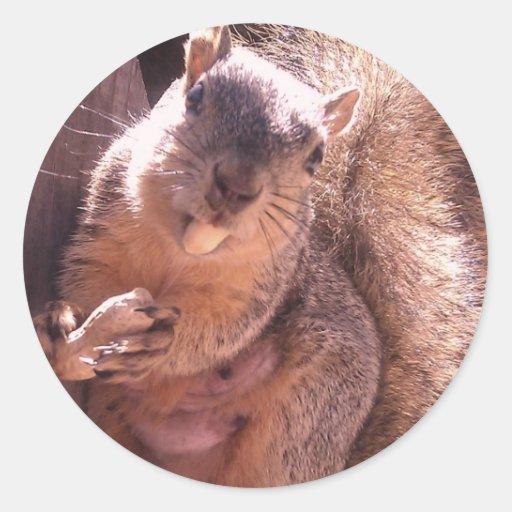 Little Missy the Squirrel Classic Round Sticker