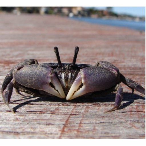 Little Mud Crab Pin Statuette