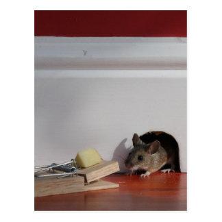 Little Nipper & Peanut Postcard