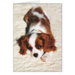 Little One Cavalier King Charles Spaniel Greeting Cards