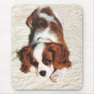 Little One Cavalier King Charles Spaniel Mousepad