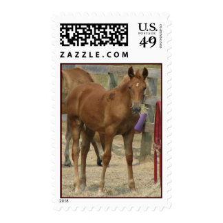 little one postage stamp