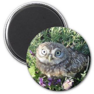 Little owl 2 inch round magnet