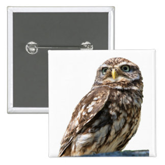 Little Owl beautiful photo portrait button, pin