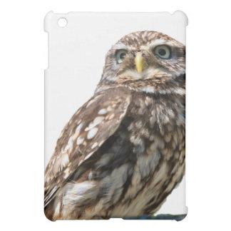 Little Owl bird beautiful photo portrait ipad case