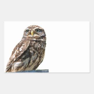 Little Owl bird beautiful photo  sticker, stickers