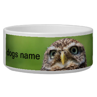 Little owl bird dog custom name pet bowl