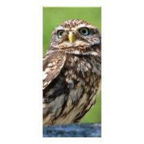 Little owl bird photo custom name bookmark rack card
