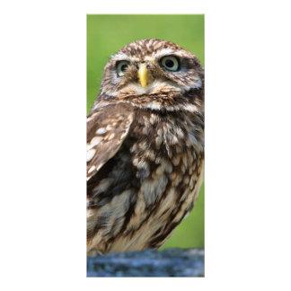 Little owl bird photo custom name bookmark rack card