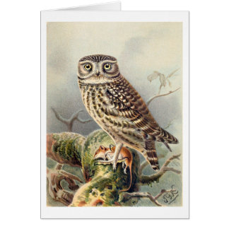 Little Owl Greeting Cards