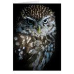 Little Owl Greetings Card
