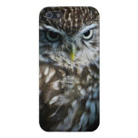 Little Owl iPhone 5/5S Covers