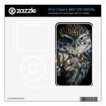 Little Owl iPod Classic Skin