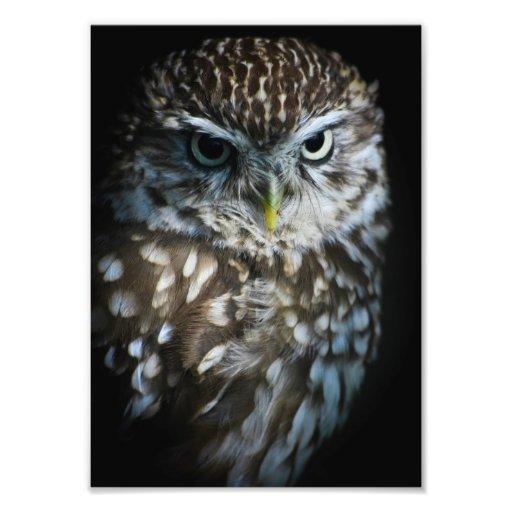 Little Owl Print Photographic Print