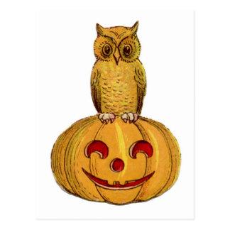 Little Owl Pumpkin Halloween Postcard