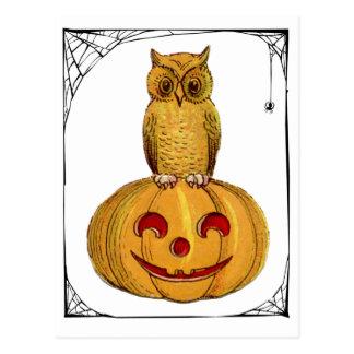 Little Owl Pumpkin Spider Web Halloween Postcard