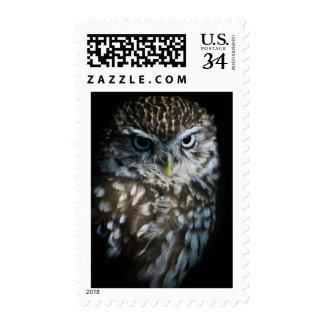 Little Owl Stamp
