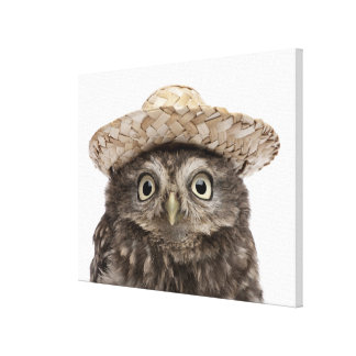 Little Owl wearing a straw hat - Athene noctua Canvas Print