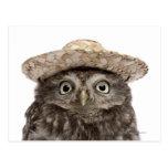 Little Owl wearing a straw hat - Athene noctua Post Card