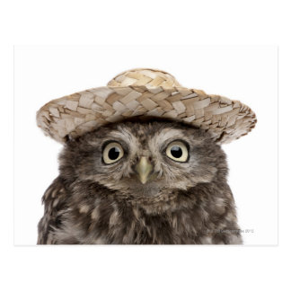 Little Owl wearing a straw hat - Athene noctua Postcard