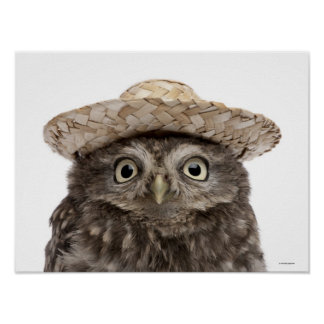 Little Owl wearing a straw hat - Athene noctua Poster