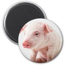 Little Pig Magnet