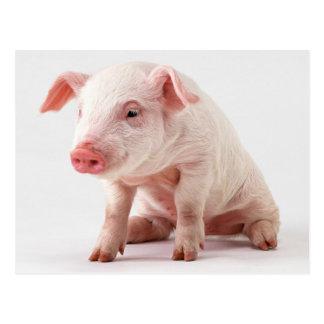Little Pig Postcard