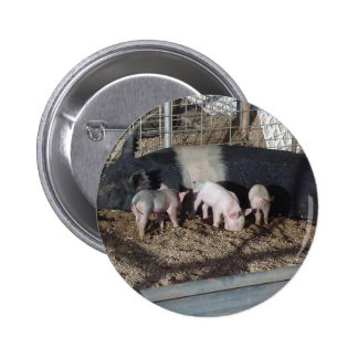 Little Piggies Pin