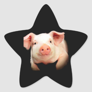 Little Piggy Star Sticker