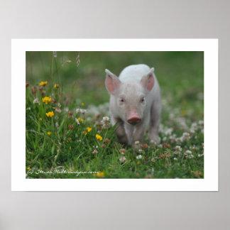 Little Piglet Walking in Flowers Poster