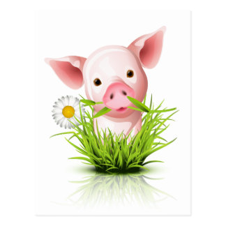 Little pink pig in grass postcard
