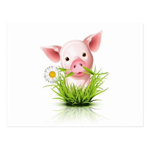 Little pink pig in grass postcard