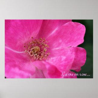 Little Pink Rose Poster