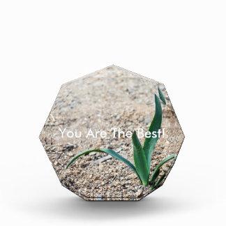 Little Plant Award