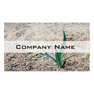 Little Plant Business Card