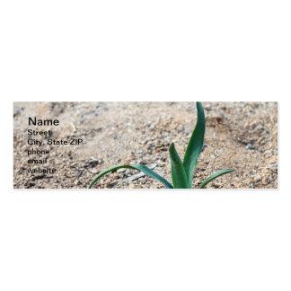 Little Plant Mini Business Card