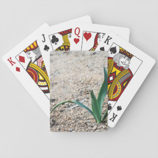 Little Plant Playing Cards