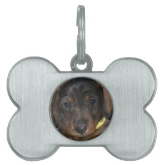Little Pooper Pet Name Tag