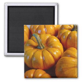 Little Pumpkins Fall Magnet