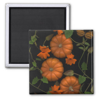 little pumpkins magnet