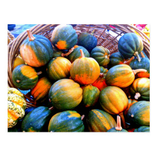 Little Pumpkins Postcard