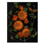 little pumpkins postcards