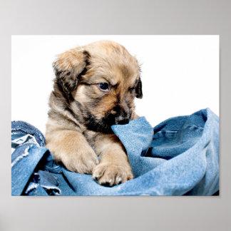 little puppie poster