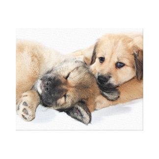 little Puppies Canvas Print