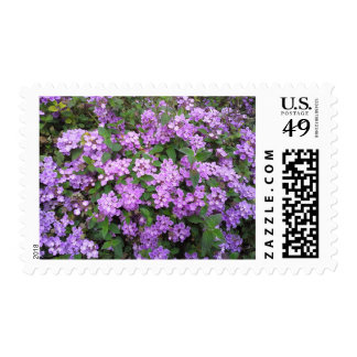 Little Purple Flowers Postage