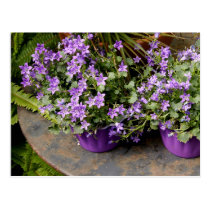 Little purple flowers postcard