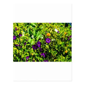 Little Purple Flowers Postcard