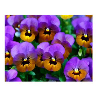 Little Purple Pansies Trimmed in Yellow Gold Postcard